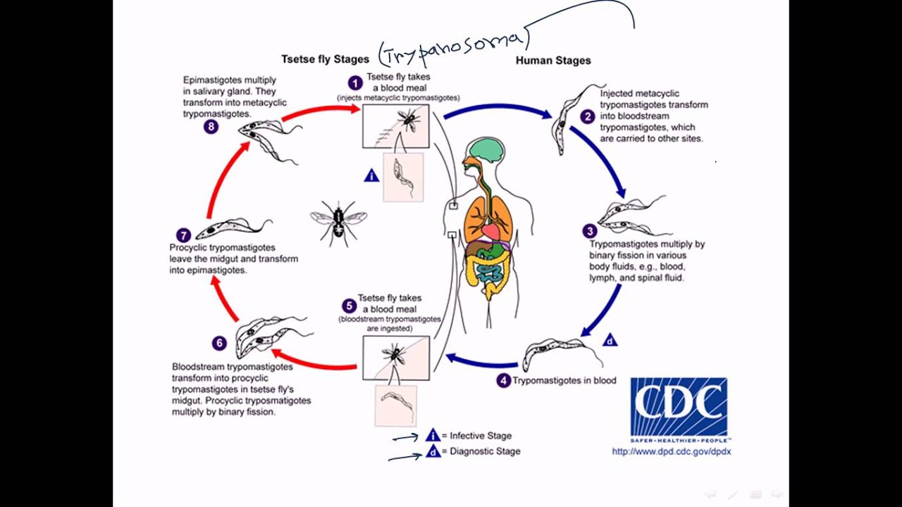 schistosomiasis meaning in hindi)