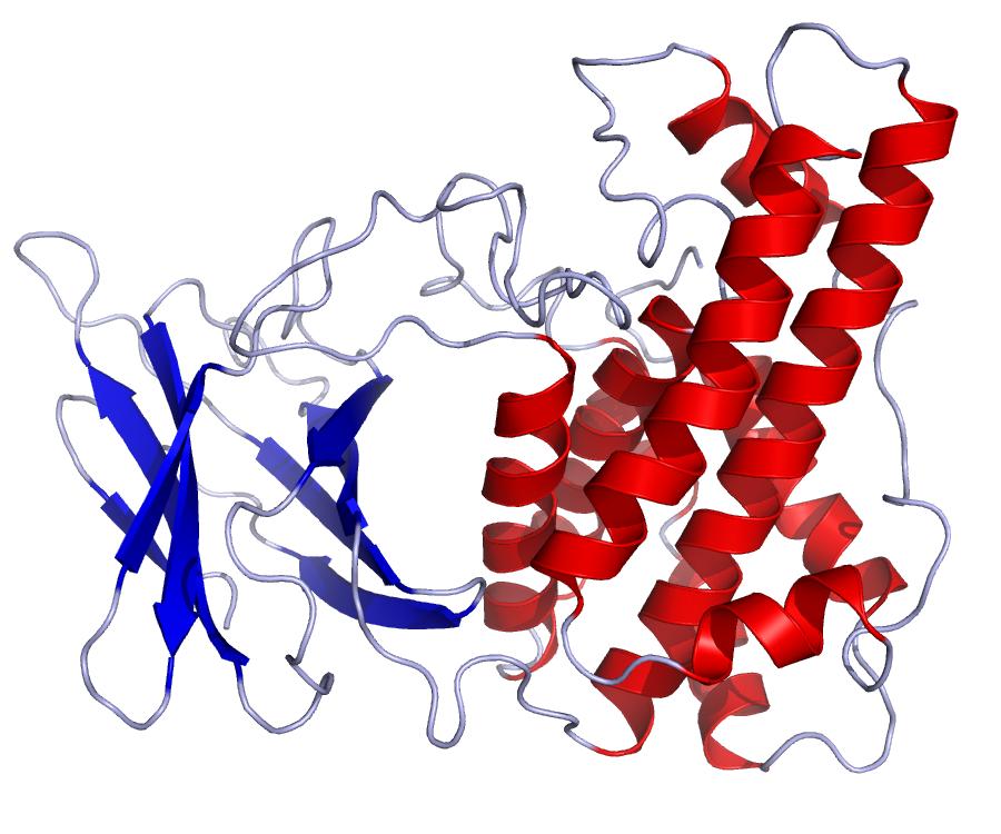 Clostridium difficile-toxine A/B | Synevo