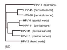 wart virus types
