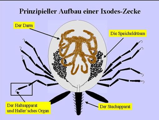 zecken toxine)