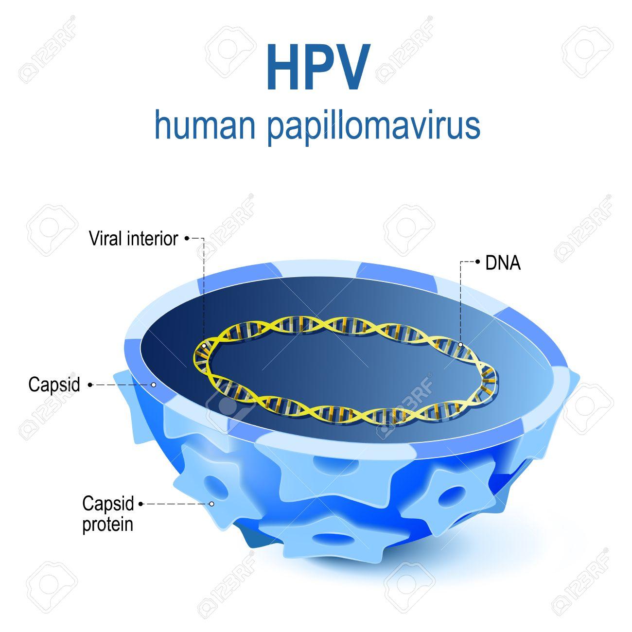Human papillomavirus dna or rna. Hpv na lingua e transmissivel