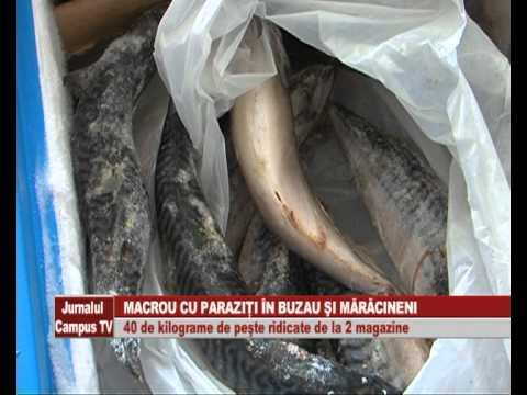 paraziti macrou)