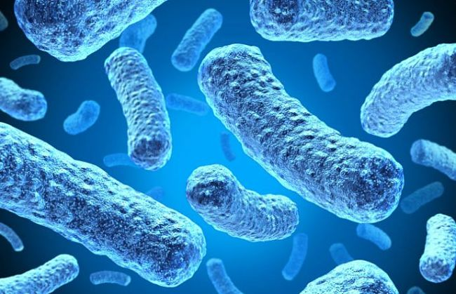 jak na paraziti v tele