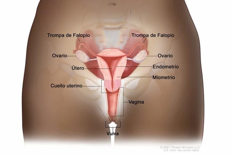 sintomas de cancer de utero por hpv