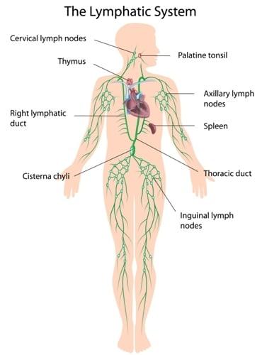 cancer metastatic gastric)