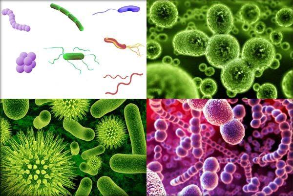 Organism unicelular