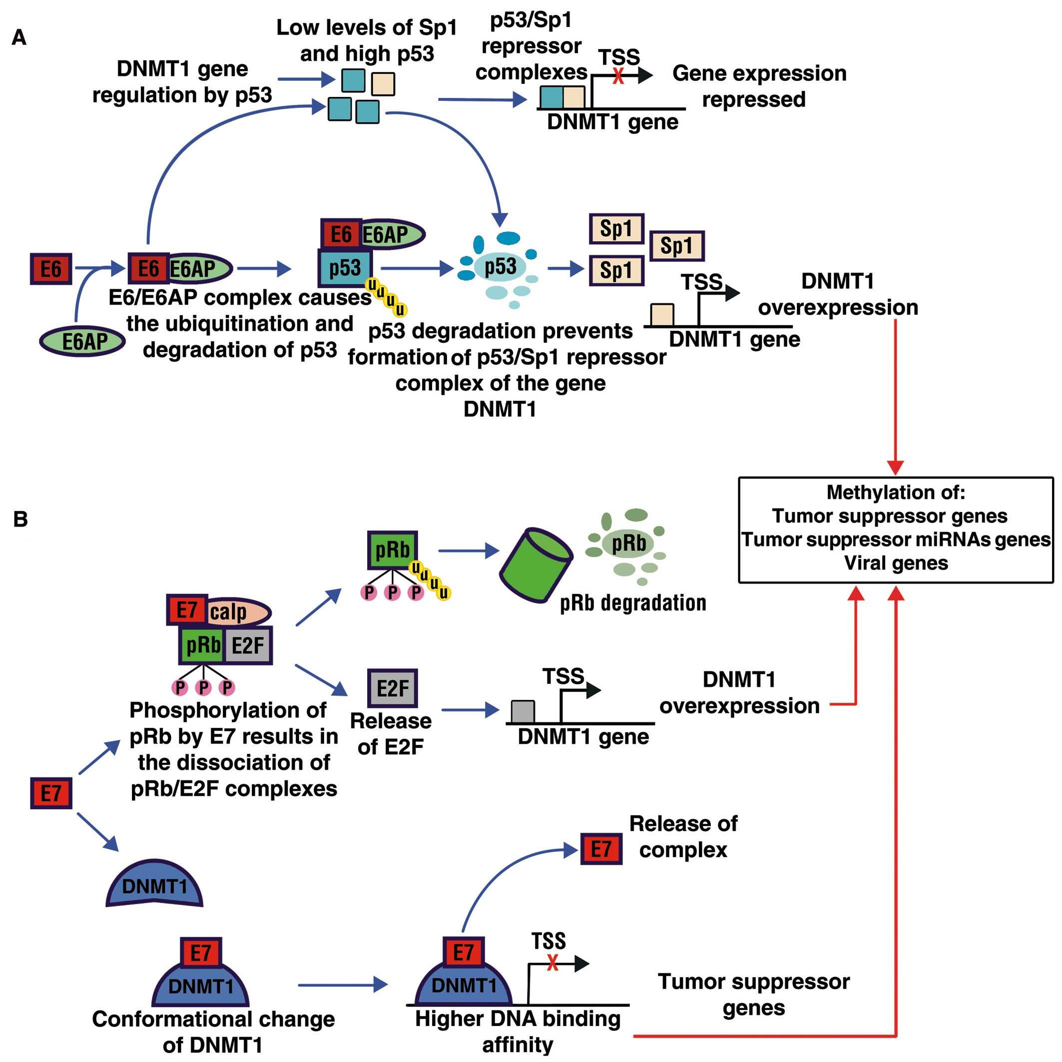 hpv virus and discharge definition for papillomavirus