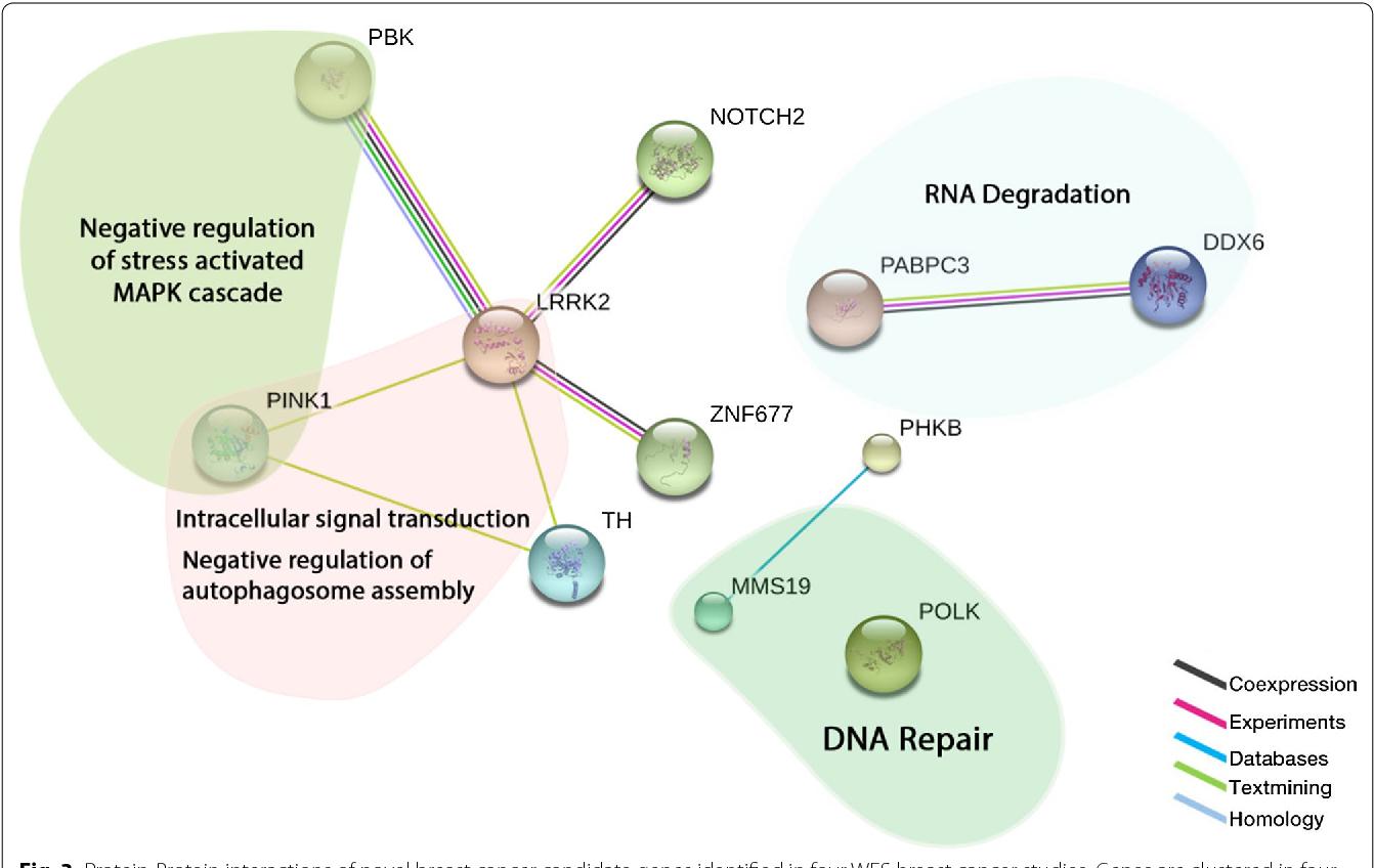 cancer genetic predisposition