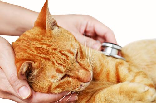cancerul la gat este contagios