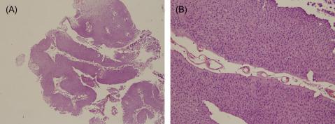 Diagnostic Pathology: Cytopathology - kd-group.ro