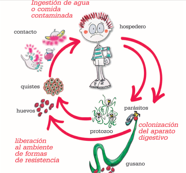 complicaciones de oxiuros papiloma krema u sarajevu