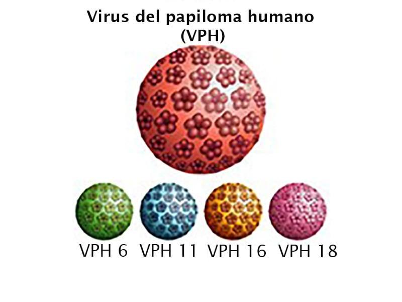 papiloma humano nombre del virus