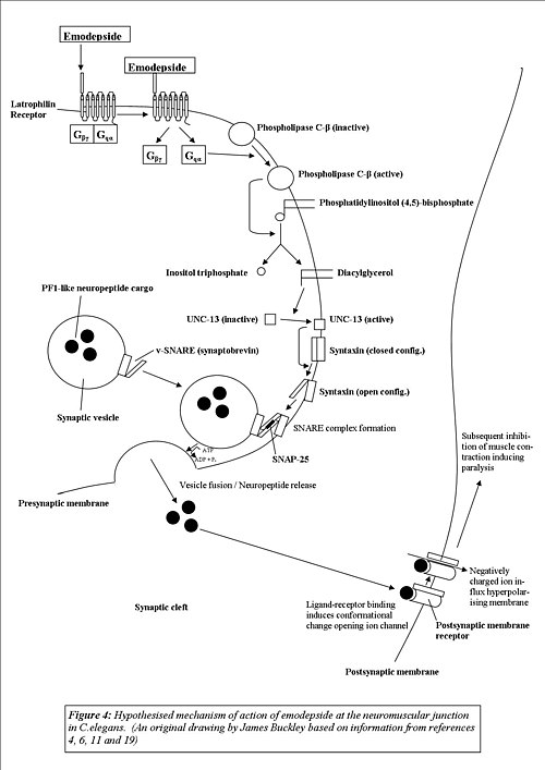 anthelmintic mode of action