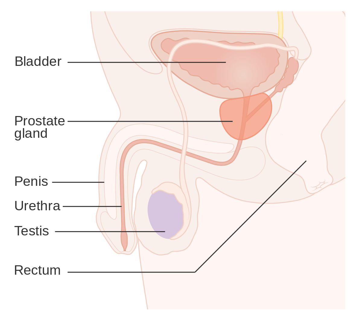 simptome cancer benign)