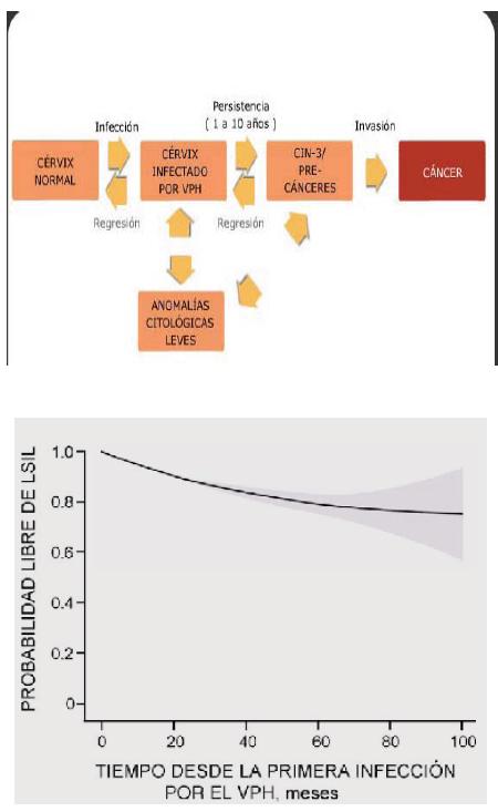 papiloma humano niveles