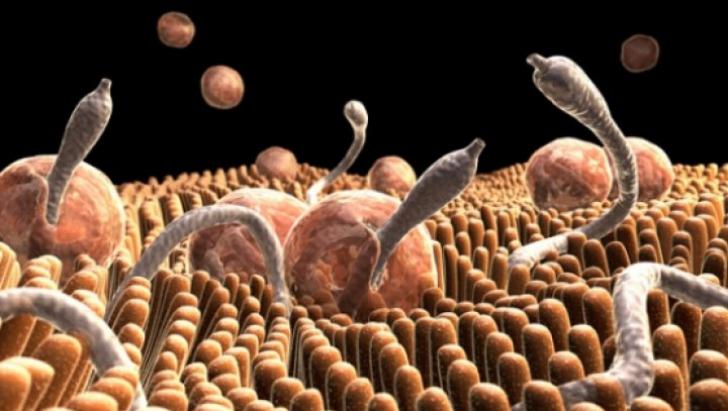 paraziti in intestinali