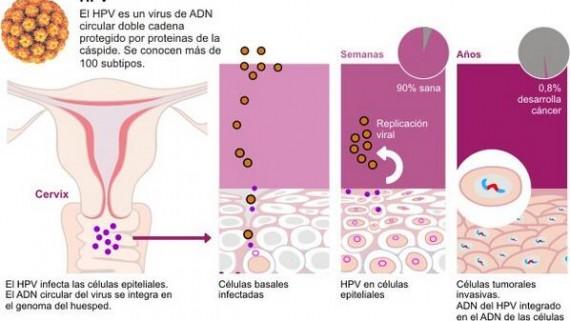 herpes genital papiloma humano)
