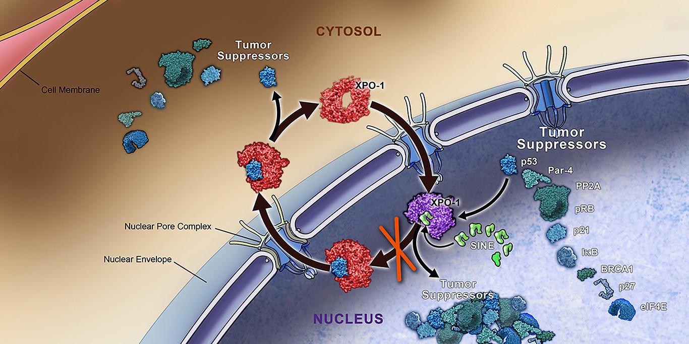 lung cancer genetic mutation)