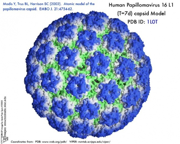 human papilloma virus (hpv) i)