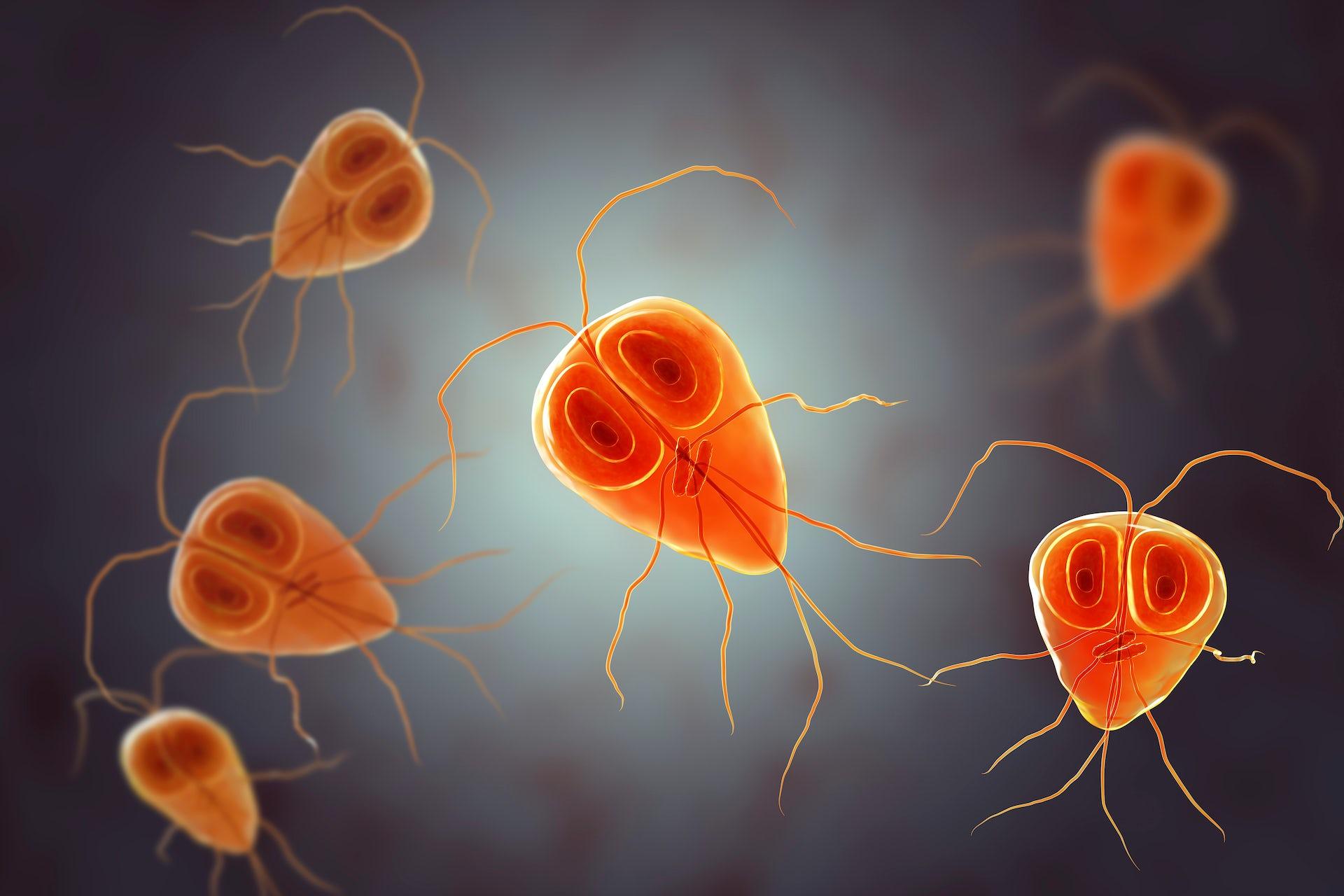 que enfermedad producen los oxiuros