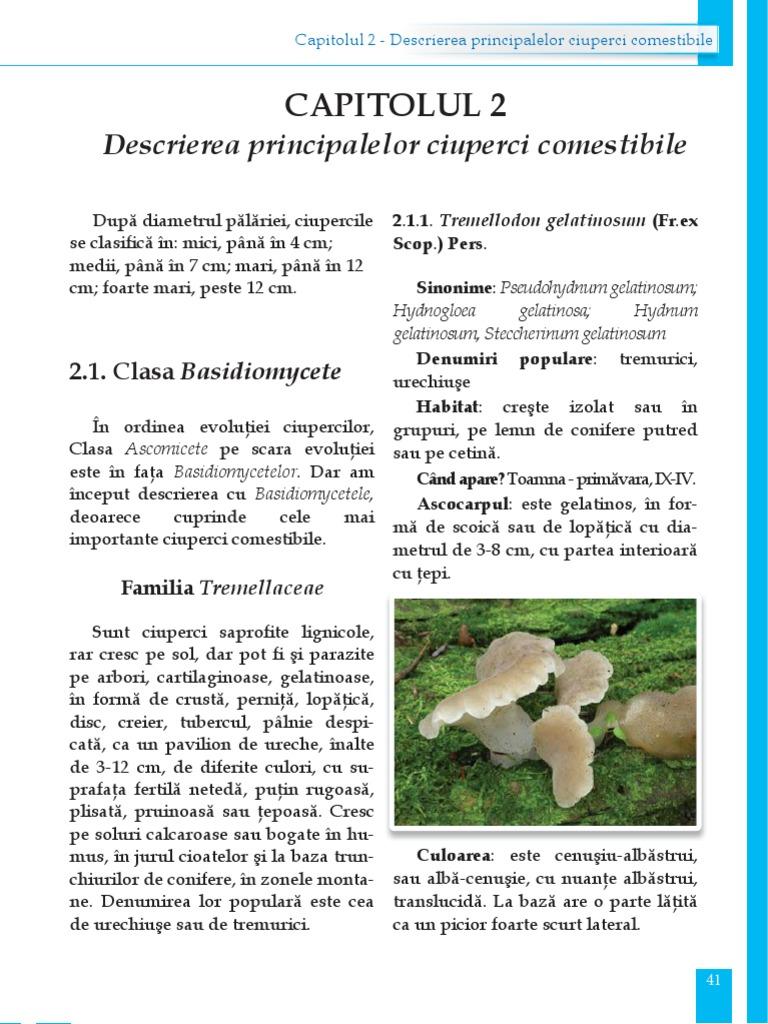 Ciupercile otravitoare – cum le recunoști - kd-group.ro