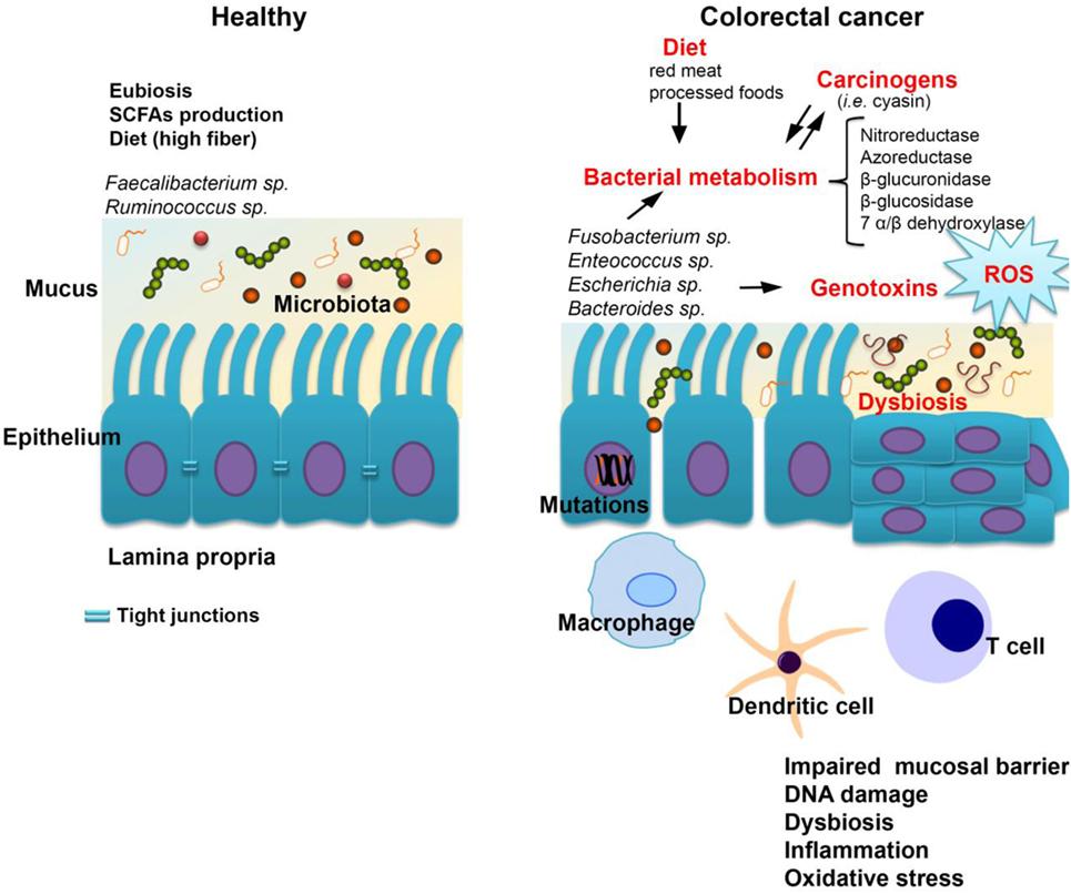 Tratament miraculos pentru întinerire și prevenire a cancerului