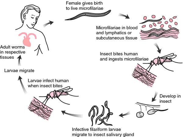 Discuție:Microorganism