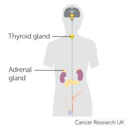 cancer affecting hormones)
