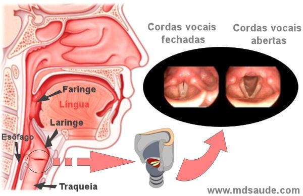 cancer laringe faringe sintomas)