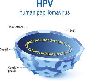 hpv infektion definition)