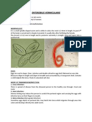 enterobius vermicularis caso clinico)