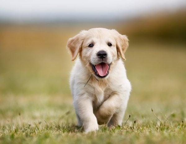 parasitos oxiuros perros)