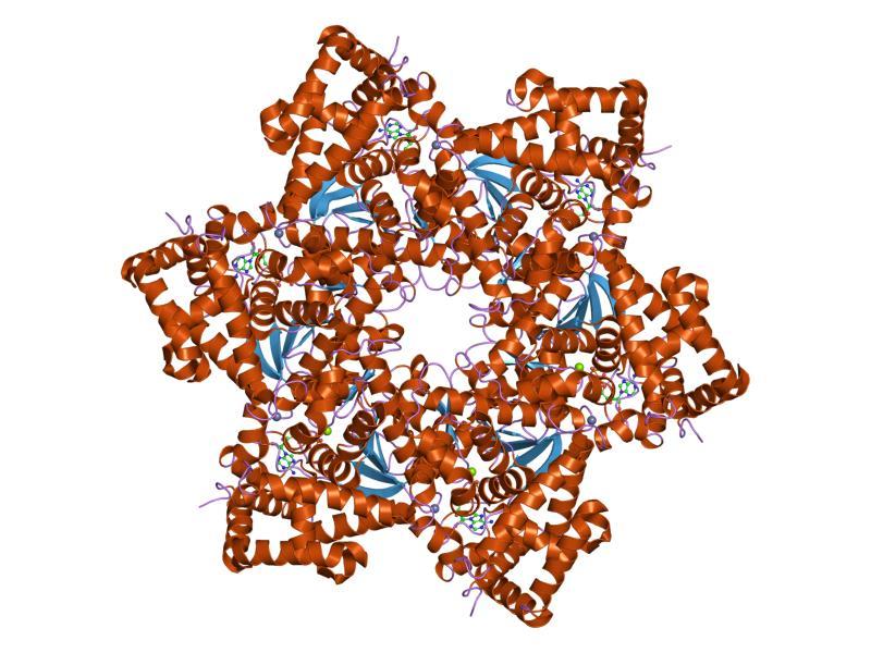 virus papiloma humano familia