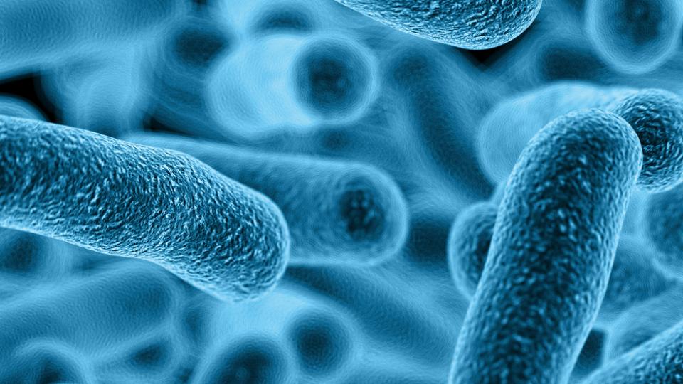 bacterie water gent)