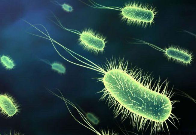 bacterii ți ciuperci