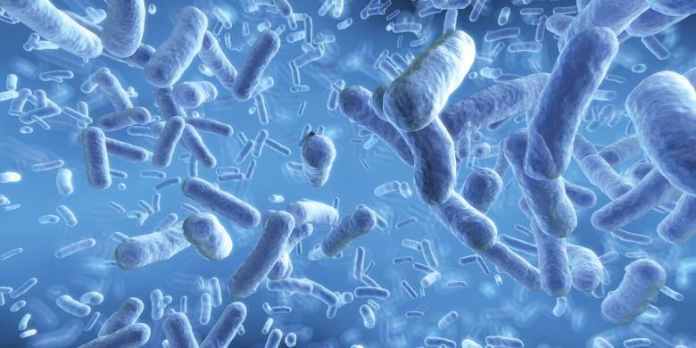 bacterii probiotice)