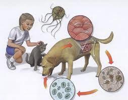 viermisori la copii simptome