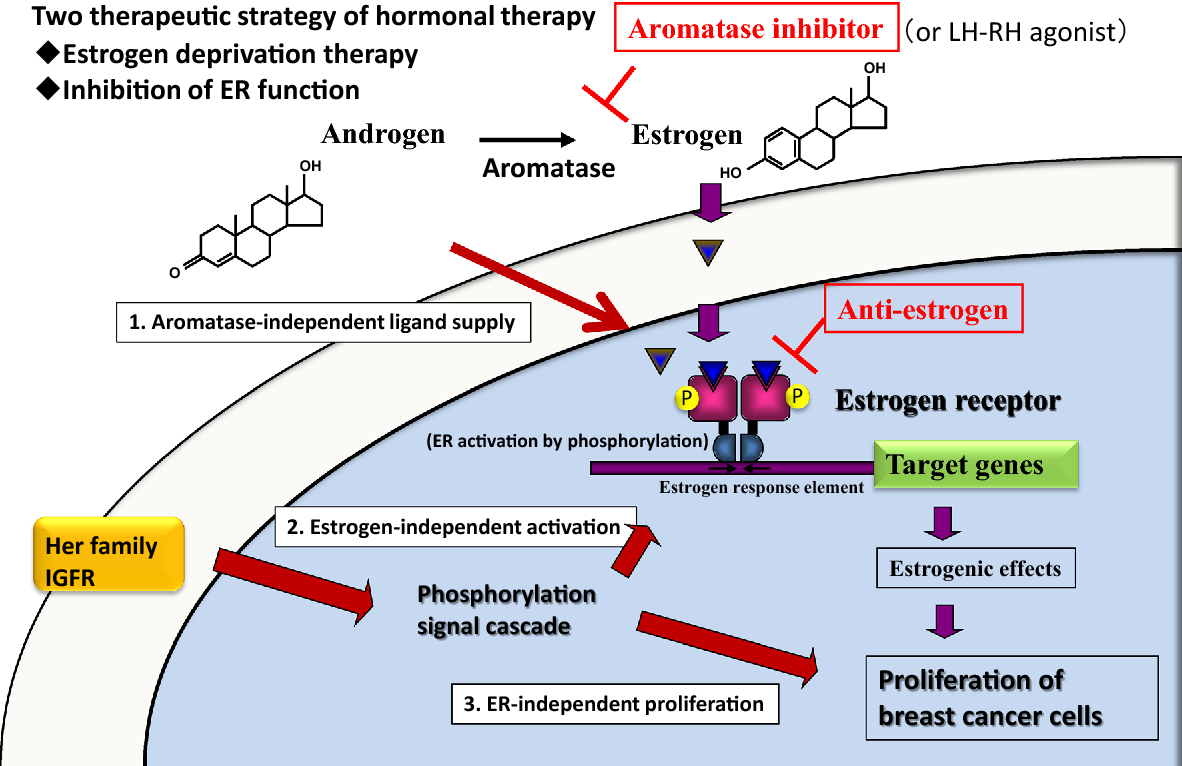 breast cancer hormonal response