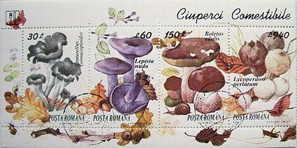 Specii de ciuperci