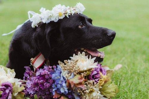 cancer cerebral en perros)