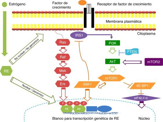 cancer hormonal positivo)