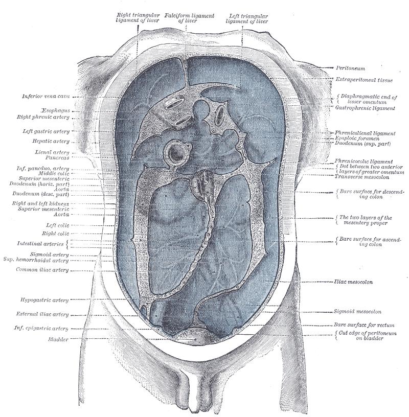 Cancerul peritoneal primitiv - Enciclopedie   OculusPrim