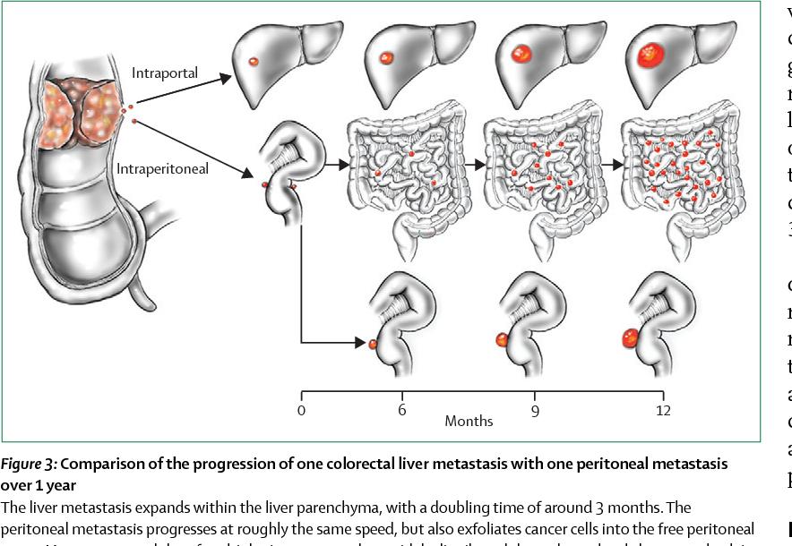 virus del papiloma humano caracteristicas hpv human cell line