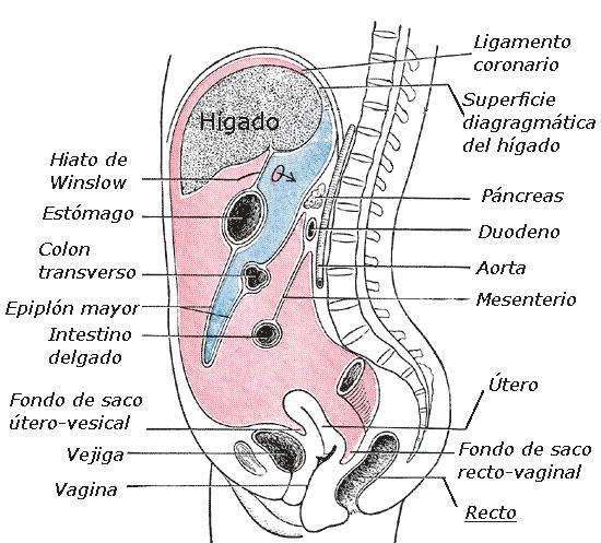 cancer primario peritoneal sintomas medicamente paraziti intestinali