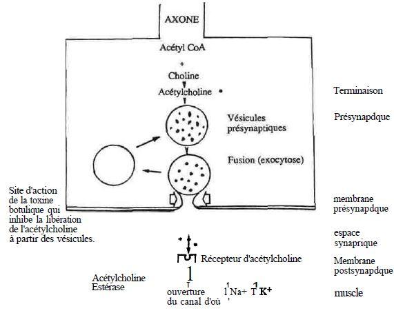 toxine uremice