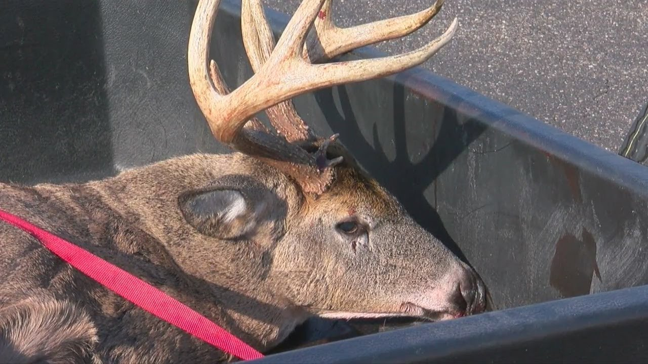 deer with hpv)