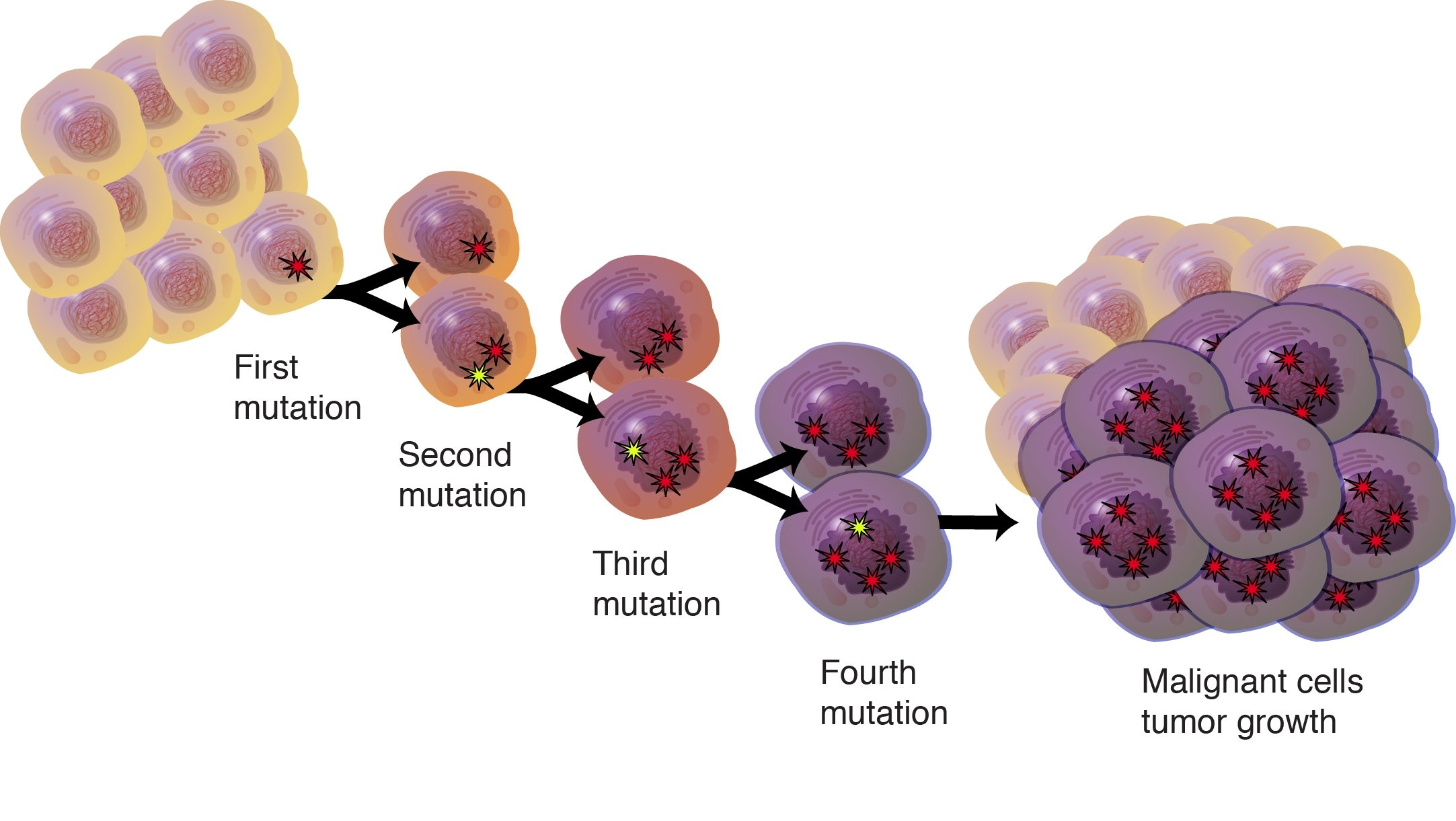 cancer genetic cause
