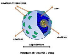 virusi z ovojnico)