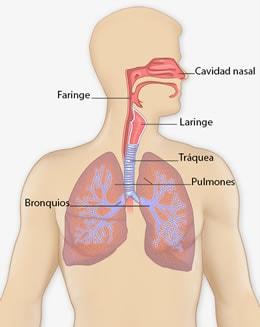 el cancer pulmonar que es neuroendocrine cancer end of life