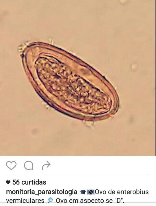enterobius vermicularis bno